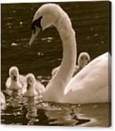 Mother Swan Canvas Print