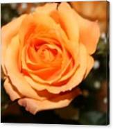 Mothers  Day Rose Canvas Print
