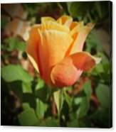 Mother's Rose Canvas Print