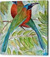 Motmots Canvas Print
