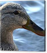 Mottled Duck Big Spring Park Crop Canvas Print