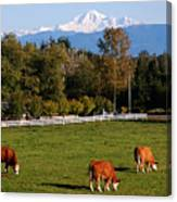 Mount Baker From Langley Bc Canvas Print