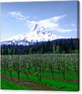 Mount Hood Behind Orchard Blossoms Canvas Print