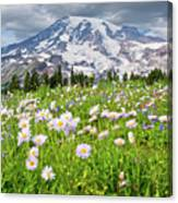 Mount Rainier And A Meadow Of Aster Canvas Print