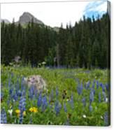 Mount Sneffels Lupine Landscape Canvas Print