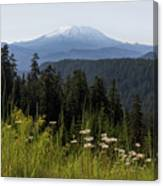 Mount St Helens In Washington State Canvas Print