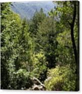 Mount Tamalpais Forest View Canvas Print