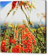 Mountain Ash Sunshine Canvas Print