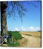 Mountain Bike Under A Tree Beside Dirt Road Canvas Print