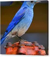 Mountain Blue Bird Canvas Print