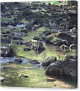 Mountain Creek Nature Spring Scene Canvas Print