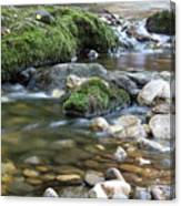 Mountain Creek Spring Nature Scene Canvas Print