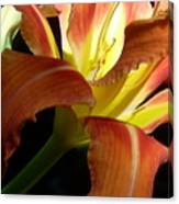 Mountain Day Lily Canvas Print