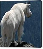 Mountain Goat 2 Canvas Print