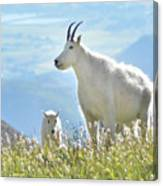 Mountain Goat Momma And Kid Canvas Print