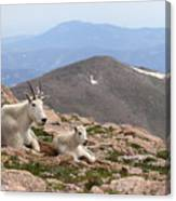 Mountain Goat Mother And Kid In Mountain Home Canvas Print
