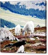 Mountain Goats 2 Canvas Print