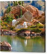 Mountain Goats In Early Fall Canvas Print