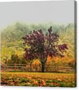 Mountain Haze In A Oak Glen Autumn Canvas Print