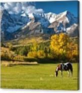 Mountain Horse Canvas Print