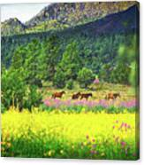 Mountain Horses Canvas Print
