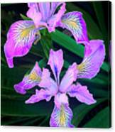 Mountain Iris In Flower California Canvas Print