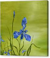 Mountain Iris Canvas Print