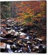 Mountain Leaves In Stream Canvas Print