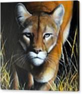 Mountain Lion In Tall Grass Canvas Print