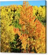 Mountain Of Color In Dillon Colorado Canvas Print
