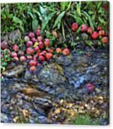 Mountain Stream In Oak Glen Canvas Print