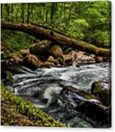 Mountain Stream Iv Canvas Print