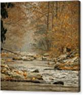 Mountain Stream With Tree Overhang #1 Canvas Print