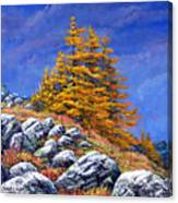 Mountain Tamaracks Canvas Print