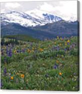 Mountain Wildfowers Canvas Print