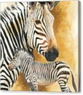 Mountain Zebra Canvas Print