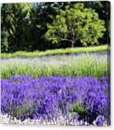 Mountainside Lavender Farm Canvas Print