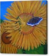 Mourning Cloak's Sunflowers Canvas Print