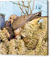 Mourning Dove And Chick Canvas Print
