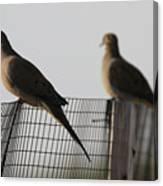 Mourning Doves Calverton New York Canvas Print