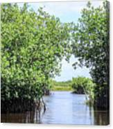 Moving The Glades Of Roatan Canvas Print