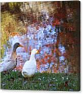 Mr And Mrs Duck Canvas Print