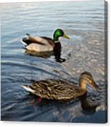 Mr And Mrs Duck On Parade Canvas Print