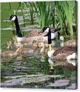 Mr And Mrs Goose And Family Canvas Print