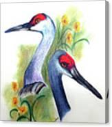 Mr And Mrs Sandhill Cranes Canvas Print