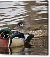 Mr. And Mrs. Wood Duck Canvas Print