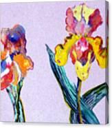 Mr. And Mrs. Yellow Iris Canvas Print