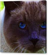 Mr. Blue Eyes Canvas Print