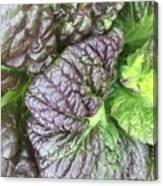 Mr. Cabbage's Little Secret Canvas Print
