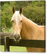 Mr. Ed Canvas Print